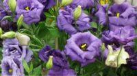 Od zaraz Holandia praca w ogrodnictwie przy kwiatach bez znajomości języka Zaltbommel