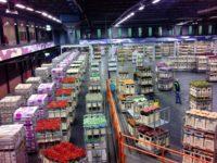 Praca Holandia na produkcji – kwiaty cięte od zaraz z j. angielskim w Zaanstad