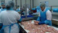 Pakowanie kurczaków dam pracę w Holandii od zaraz bez znajomości języka w Doetinchem