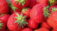 Sezonowa praca Holandia zbiór truskawek od zaraz w Roosendaal 2020
