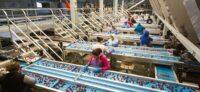 Od zaraz dam pracę w Holandii – sortowanie owoców i warzyw, Westland
