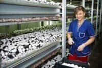 Sezonowa praca w Holandii bez języka przy zbiorach pieczarek od zaraz Venlo