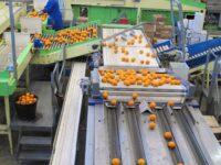 Sortowanie owoców dam pracę w Holandii od zaraz bez języka w Venlo 2020