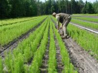 Leśnictwo od zaraz sezonowa praca w Holandii bez języka w szkółce drzewek k. Tilburga