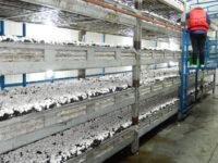 Zbiory pieczarek sezonowa praca w Holandii bez języka od zaraz, Venlo