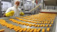Oferta pracy w Holandii od zaraz produkcja przekąsek fingerfood, Wijk bij Duurstede