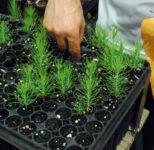 Ogrodnictwo oferta pracy w Holandii jako pracownik szkółki drzewek, Etten-Leur