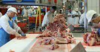 Dam pracę w Holandii 2021 w zakładach mięsnych – szynka wieprzowa – taśma