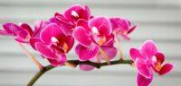 Ogrodnictwo dam pracę w Holandii od zaraz przy kwiatach-orchideach w Hadze