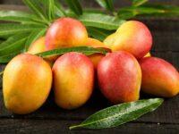 Sortowanie owoców od zaraz dam pracę w Holandii dla par bez języka, Haga 2021