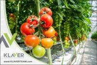 Dam pracę w Holandii w ogrodnictwie od zaraz bez języka w szklarni z pomidorami, De Lier