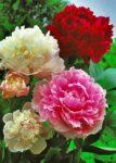 Dam pracę w Holandii w ogrodnictwie od zaraz przy kwiatach także dla par, Leiden
