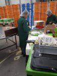 Dla par od zaraz dam pracę w Holandii bez języka przy sortowaniu-pakowaniu owoców i warzyw, Haga