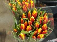 Oferta pracy w Holandii od zaraz przy kwiatach ogrodnictwo 2021 Bleiswijk