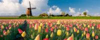 Holandia praca od zaraz w ogrodnictwie przy kwiatach w szklarni w Poeldijk nie ma kwarantanny