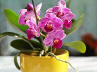 Ogrodnictwo dam pracę w Holandii bez języka dla par przy kwiatach w Poeldijk 2021