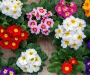 Ogrodnictwo Holandia praca od zaraz w szklarni z kwiatami bez języka, Hoek van Holland