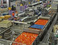 Pakowanie owoców bez języka Holandia praca od zaraz także dla par i uczniów Venlo