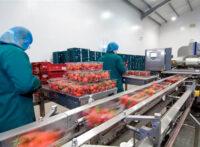 Dam pracę w Holandii bez języka przy pakowaniu owoców dla studentów i uczniów w Venlo