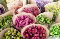 Ogrodnictwo praca w Holandii przy kwiatach-sadzonkach od zaraz bez języka