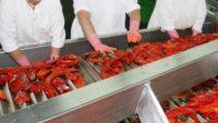 Bez znajomości języka oferta pracy w Holandii przy pakowaniu-sortowaniu warzyw, Ridderkerk
