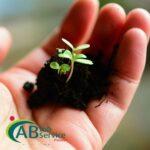 Ogrodnictwo praca Holandia pielęgnacja sadzonek roślin od zaraz, Lottum