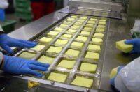 Produkcja sera praca Holandia bez znajomości języka od zaraz w Gemert